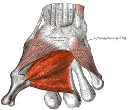Can Cubital Tunnel cause constant twitching in the area between the thumb and forefinger?