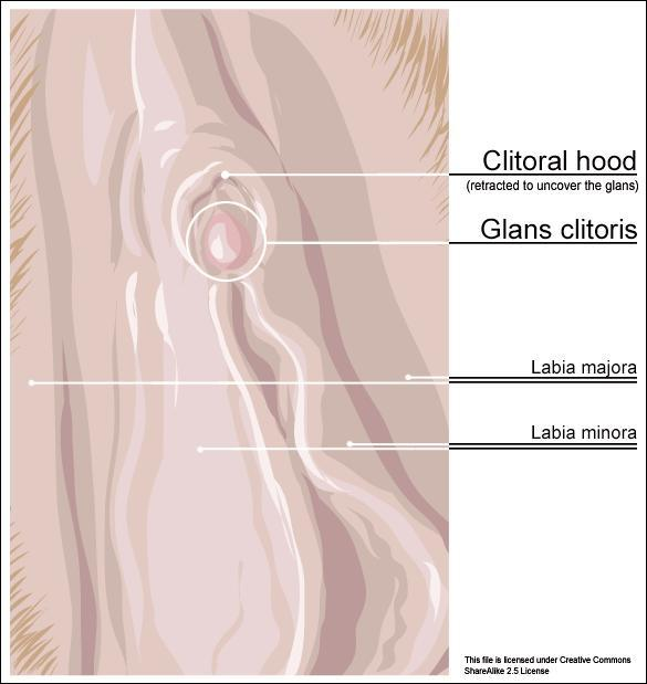 Can bump on clitoris hood total sex