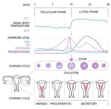 Ive a 28day cycle &had unprotected sex on the 21st day. I had cervical discharge a week before. My period is 2 days late &im cramping. Am i pregnant?