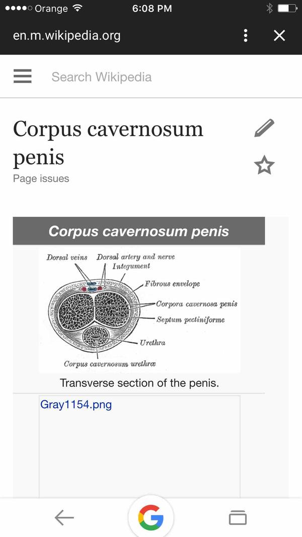 2 corpora carvernosa join at head of penis , where they join near/in head be felt as more sensation during erection and Sex though rest is all hard ?