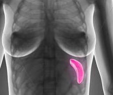 Had CT of pelvis &abdomen- doc said all nml- report says mild enlarged spleen 13cm. She said she isn't concerned - CMP, - nml - is 13cm bad?