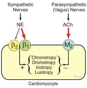 How do you get the same cardio benefits when on beta blockers if you cant get your heart rate yp to aerobic zones?