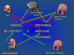 Orthostatic hypotension. Cardio gave fludrocortisone 0.1 mg. 1 month now& bp lower w/,sudden SOB, chest tightness/pressure, nausea &weak. Need advice.