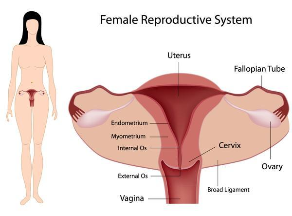 What types of female sterilization exist?