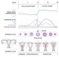 Post-menstrual bleeding cycle day 10+. No cramps/trauma. Sometimes red/clots moderate flow. Mostly brown spotting/light flow. Lasts 3-7 days. Why?