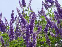 Is vitex the same as spironolactone?