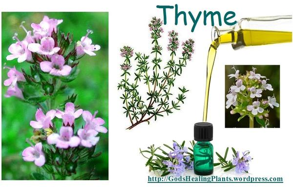 What are the benefits of thyme as a medicine?