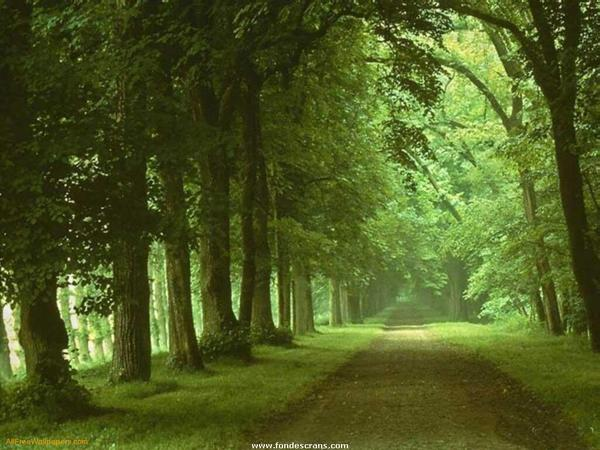 What are the spiritual benefits of walking in nature?