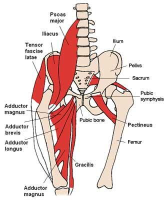 What is hip flexion and what muscles create it?