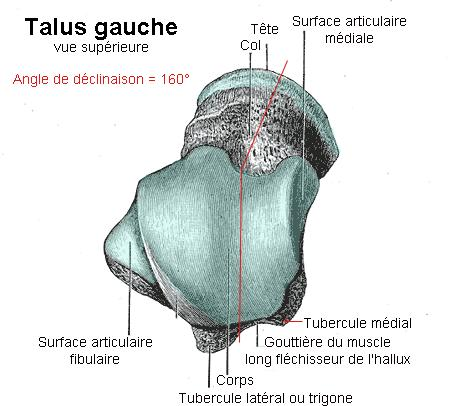 What are the tests for talus fracture?
