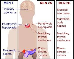 What is the definition or description of: Multiple endocrine neoplasia?