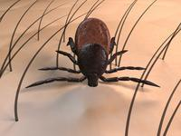 How bad are ticks to humans?