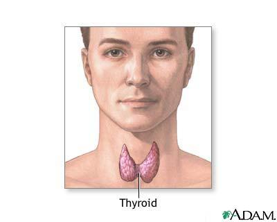 Anyone taken armour, thyrolar (thyroxine and liothyronine)?
