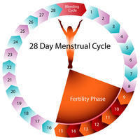 Can I get pregnant on the first and second day of ovulation. What are my chances?
