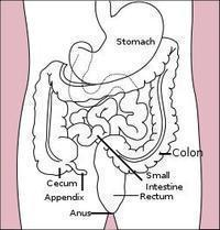What cold be the cause of constant vomitting and stomach ache?