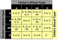 Is it possible for two brothers to have the same blood type (O+) while the third belongs to a different blood group (A+)? If yes, how probable?