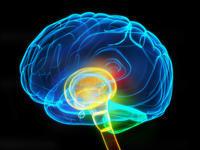 What is a chiari-brain malformation?