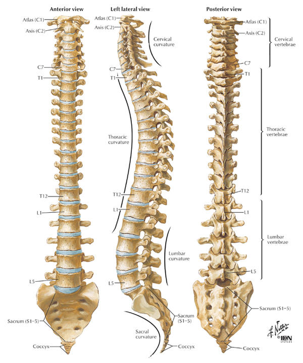 Could a curved spine cause neck ache?