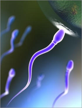 With regards to male fertility, till what age can a man have healthy sperm?