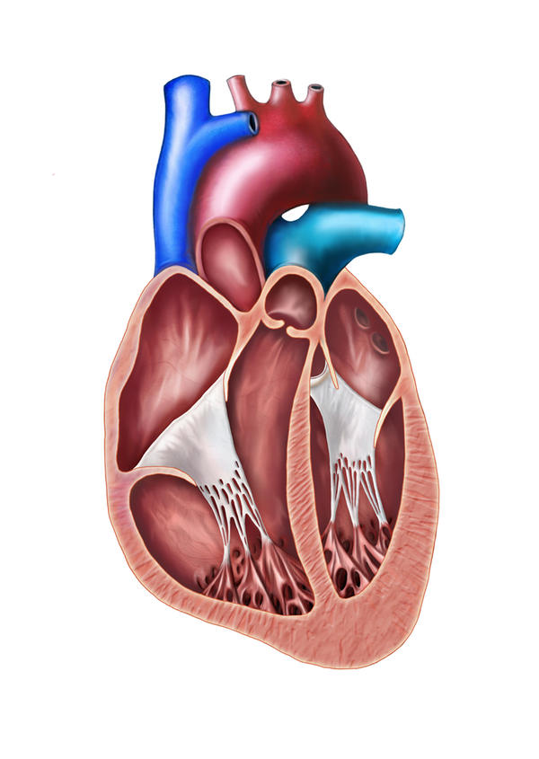 Doctor said I have a valvular heart disease so is this dangerous?