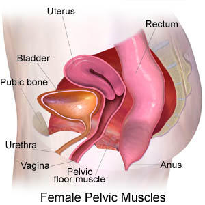 Where is your appendix located on a female - Doctor answers