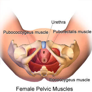 How does chronic female pelvic pain affect my wife's lovemaking?
