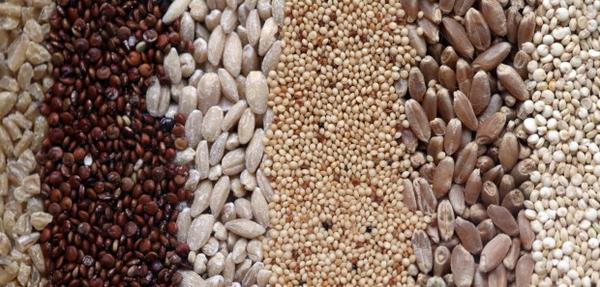 What are the benefits of quinoa and barley?
