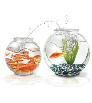 How can I do a brief relaxation session while at work? Its a fishbowl.