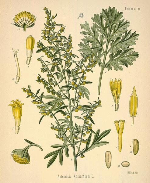 Are wormwood capsules a safe, alternative medicine?