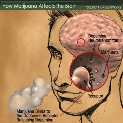 What system of the body does ganja (weed, herbs) mostly affect?