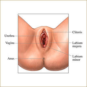 Is there anything I can do to change the appearance of my vulva?