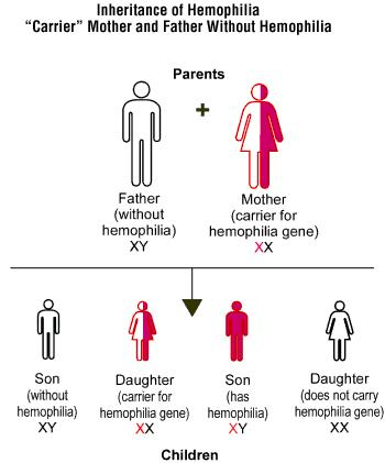 Can hemophilia and infertility be related?