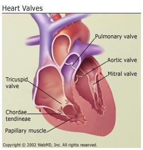 Are there any homeopathic medications that can cure heart valve diseases?