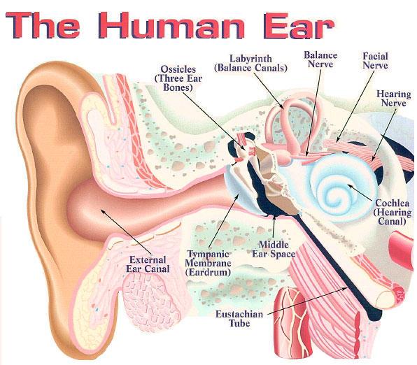 How can I improve my sensorineural hearing loss naturally?