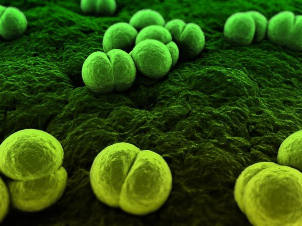 Foods that allow microorganisms to grow are called?