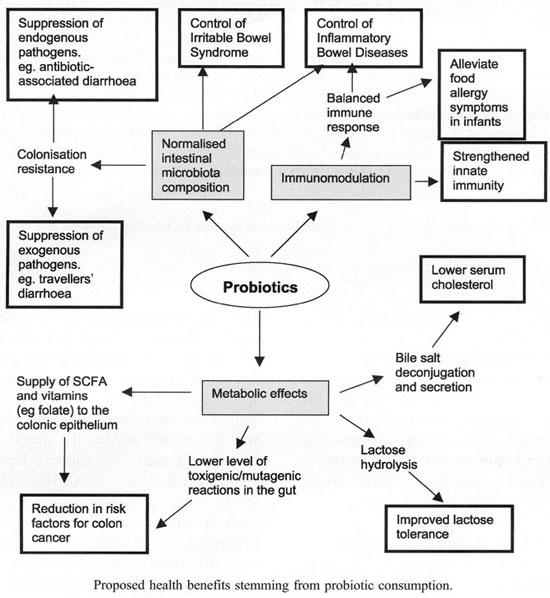 What are the uses of acidophilis capsules or florastor?