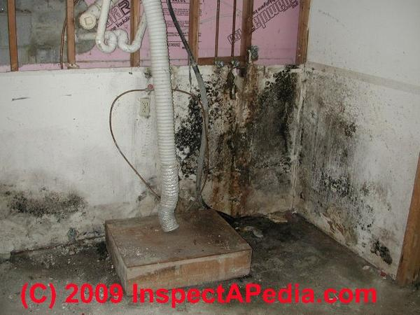 What are the effects of black mold on you? Is all black mold the same?