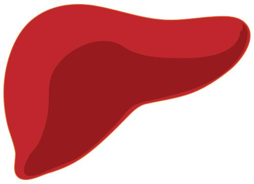 What is the relationship between hypoglycemia and liver failure?