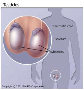 How will you be able to tell if a testicle is shrinking?