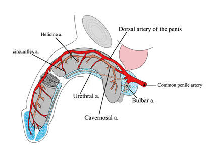 Penile pain for over a yr. Began w sneeze. Seen many drs. In past month or 2 noticed my penis gets extremely cold to touch, often painfully. Ideas?