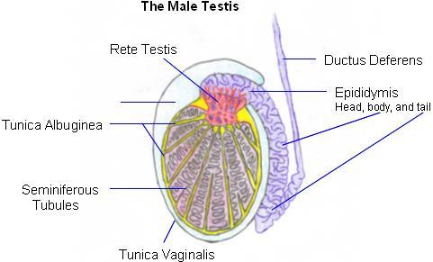 What can I do to address persistent sensations in my scrotum or testicles daily?