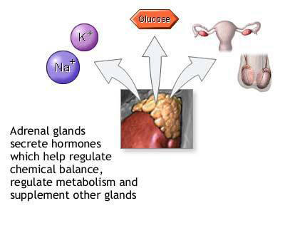 How are the adrenal glands which secrete testosterone hormones blocked?
