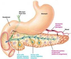 How long can someone with chronic pancreatitis survive?