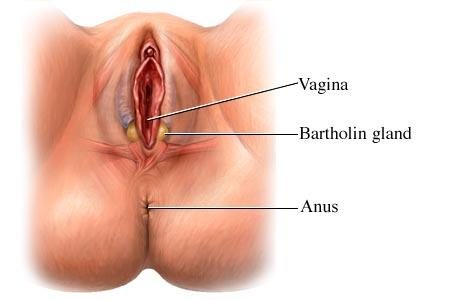 Nice not itchy bumps on vulva know