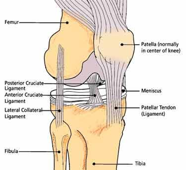 torn ligament in knee recovery time - doctor answers on healthtap, Cephalic Vein