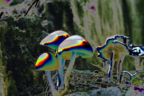 how to make magic mushrooms