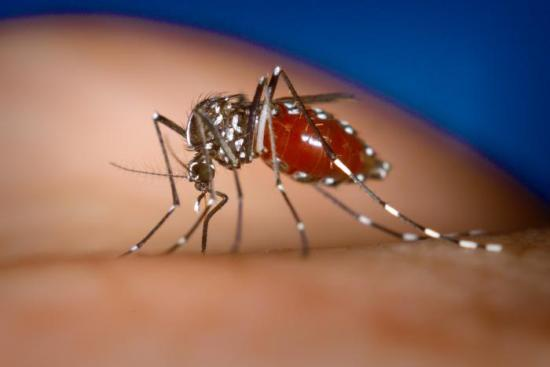 What is dengue?