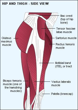 hip flexors and hip abductors