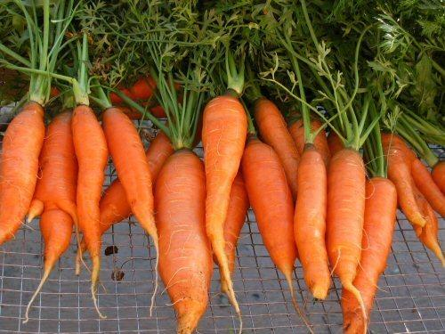 Why would a person crave raw carrots and the cause a problem if eaten in excess?