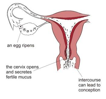 I have vaginal pain since yesterday when I had sex. The pain started right after I had sex. Can it be an early pregnancy symptom?